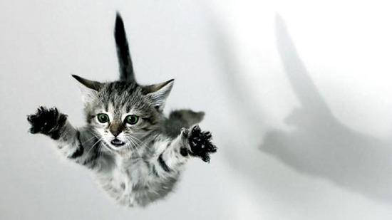 苹果iphone新防摔专利,是向猫咪学习的